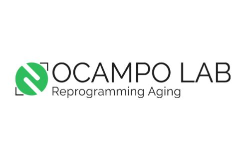 Diseño de logotipo horizontal Ocampo Lab